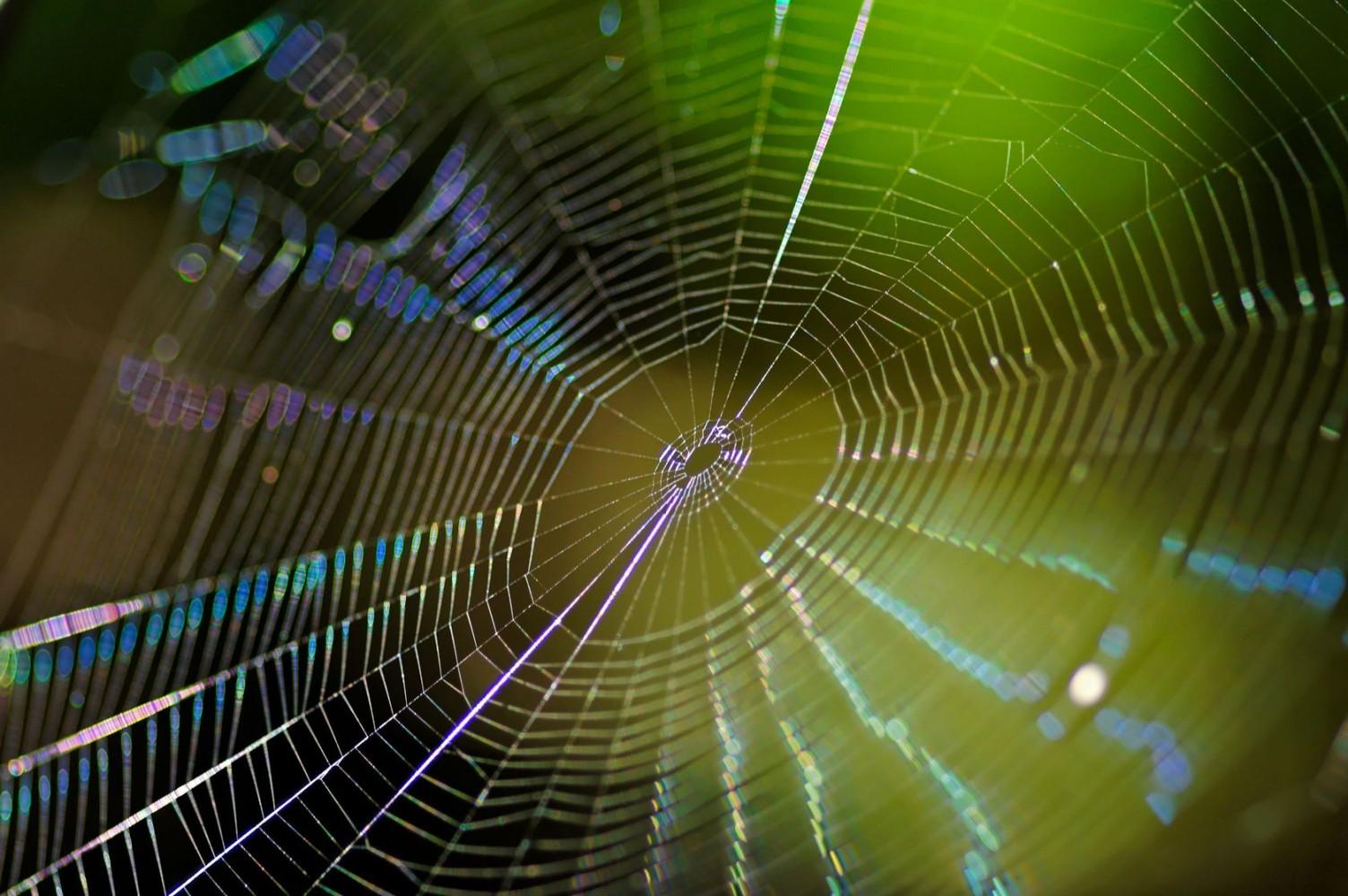 SpinnenwebLicht